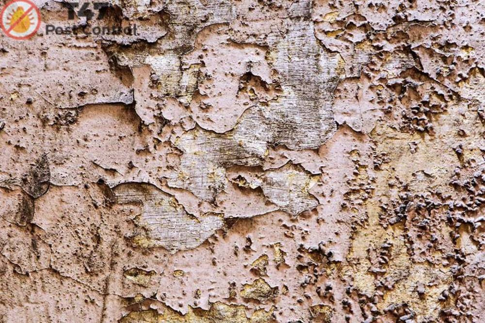 Do Termites Have Ability To Fly? | Pest Control Caufield
